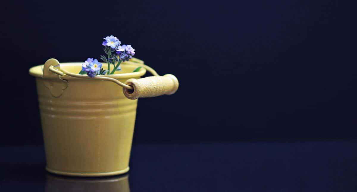 still life, bucket, metal, flowers, decoration, blue, petal