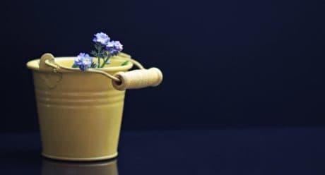 nature morte, seau, métal, fleurs, décoration, bleu, pétale