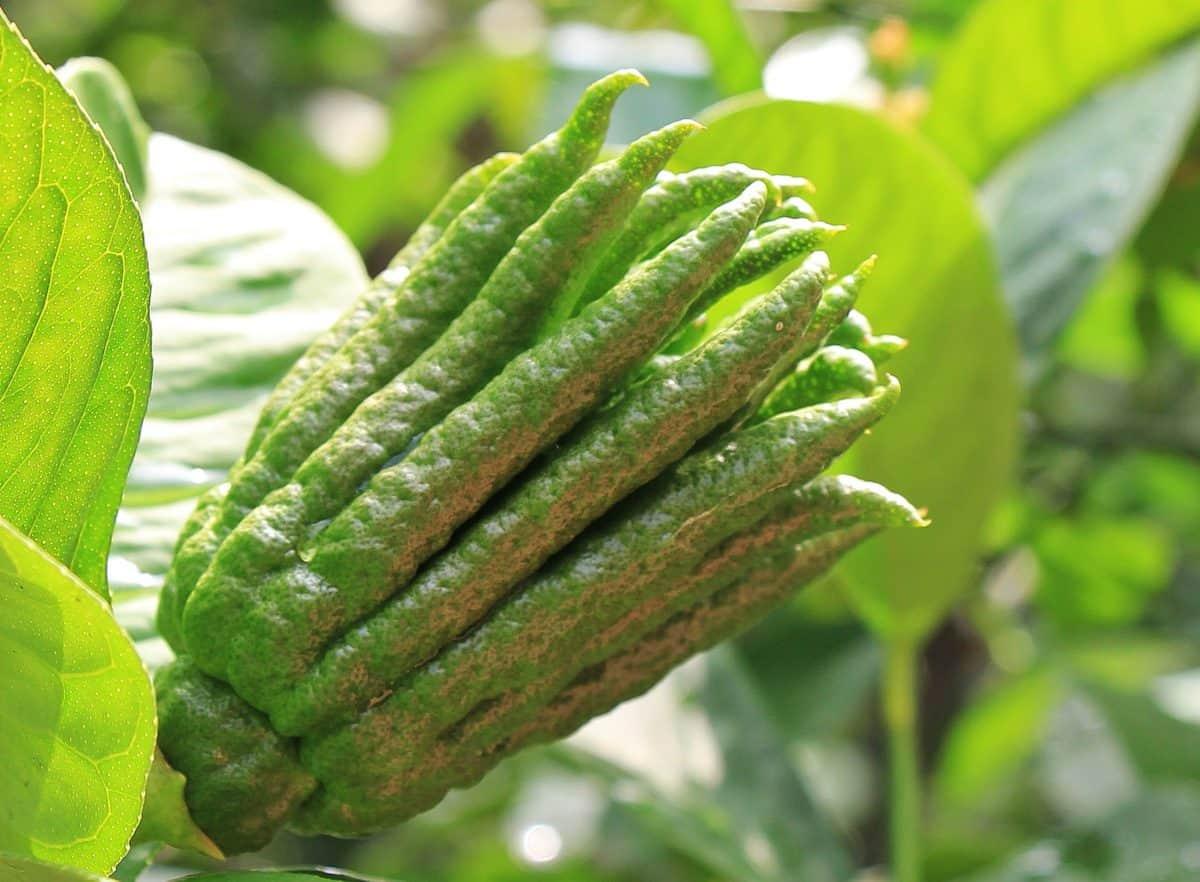 green leaf, plant, flora, garden, spring, detail