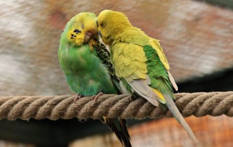 parrot, bird, rope, love, colorful, wildlife, animal
