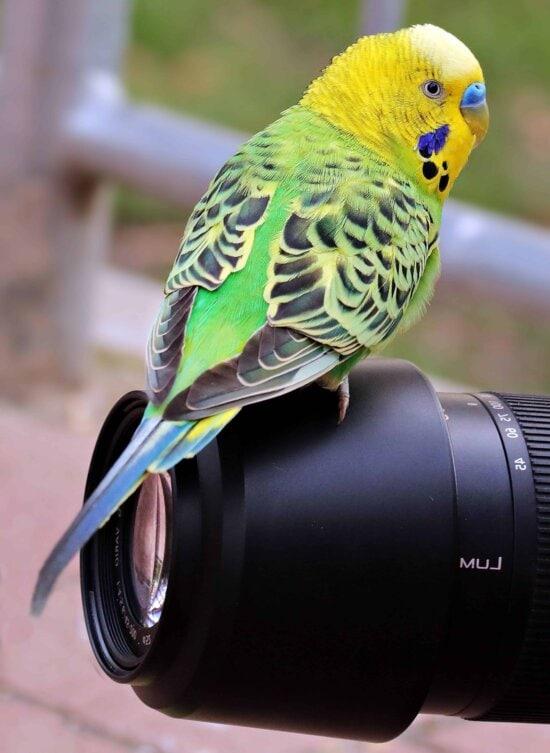 Fotokamera, Vogel, Natur, Tier, bunt, Objektiv, Objekt