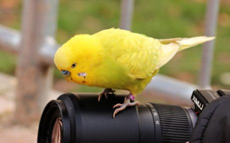 bird, animal, photo camera, lens, outdoor, parrot