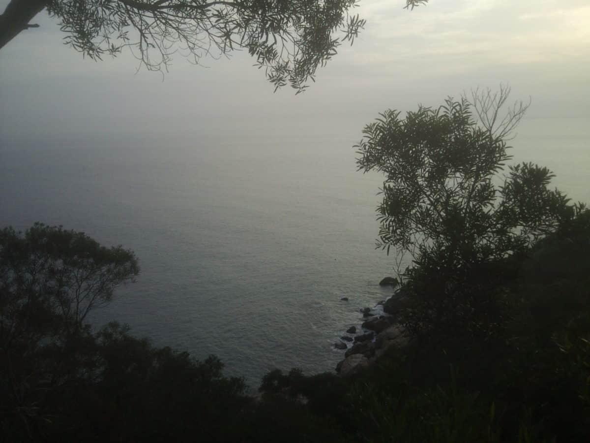зората, природа, мъгла, мъгла, езерото, вода, дърво, пейзаж, небе