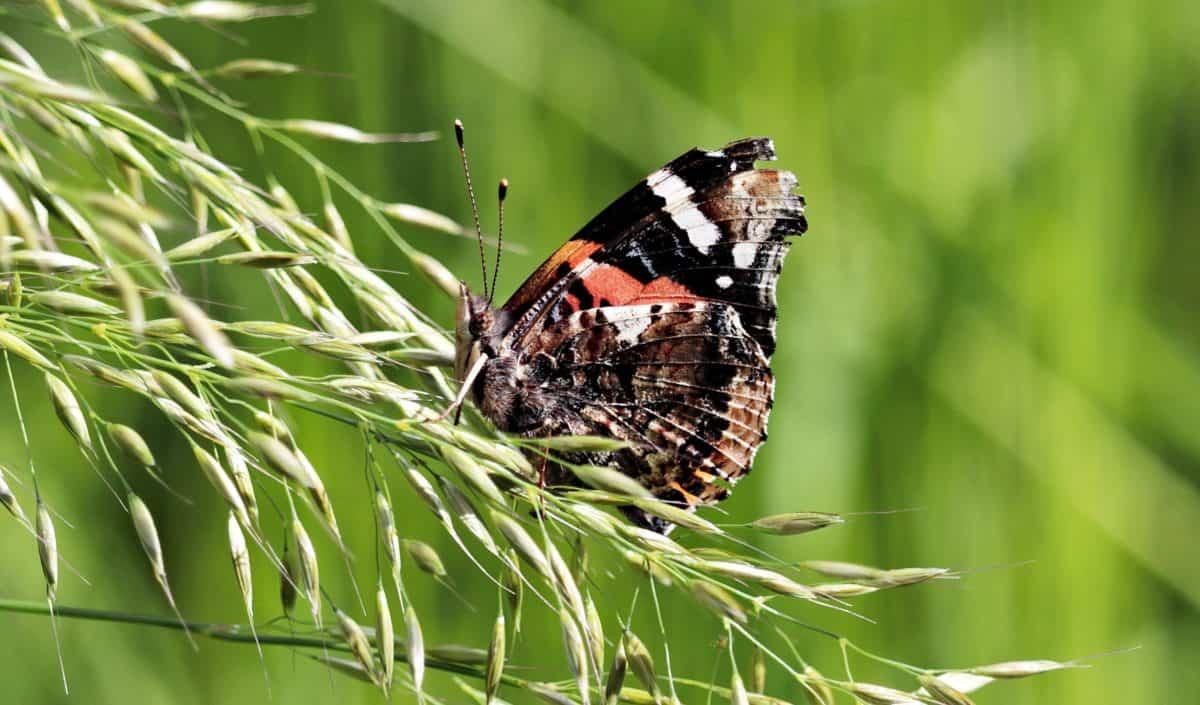 nature, papillon insecte, animal, plein air, coloré, plante, feuille verte