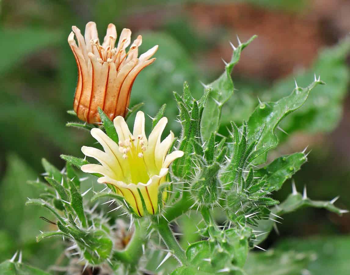 summer, garden, yellow flower, nature, leaf, flora, plant