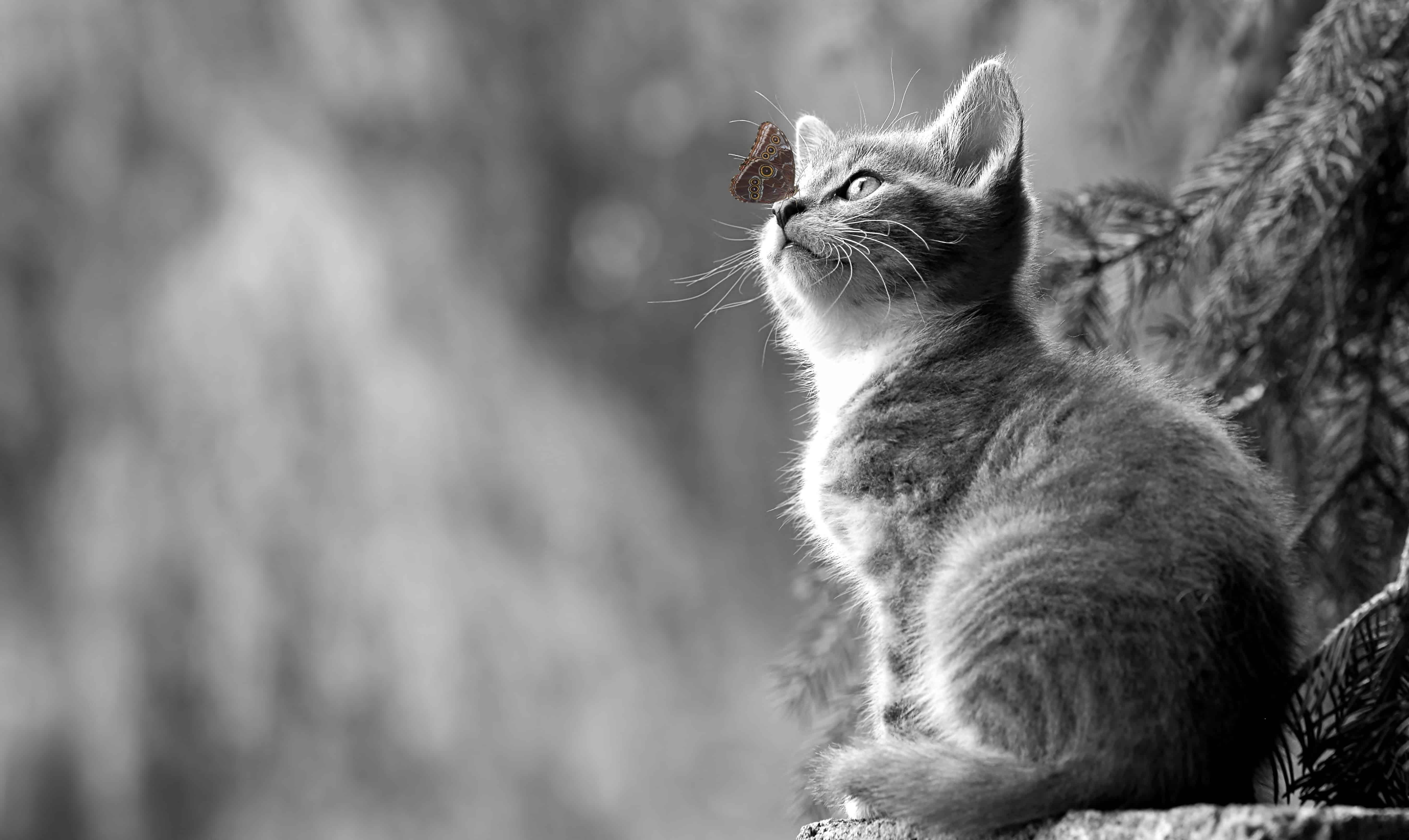 čierna a biela dievča mačička frre Gay porno