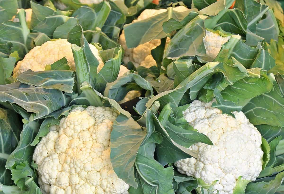 agriculture, nature, food, cauliflower, leaf, nutrition, vegetable