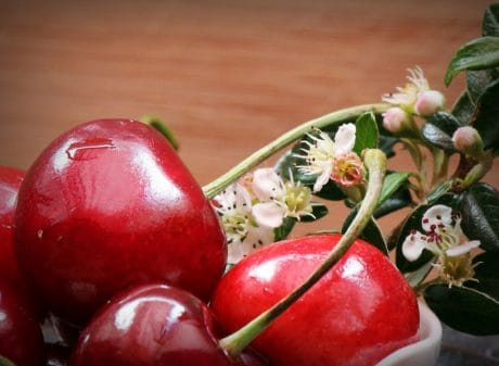 blomst, blad, kirsebær, frugt, kost, økologisk, blomst, foråret