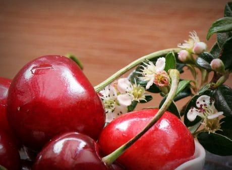 flor, hoja, cereza, fruta, dieta, orgánico, flor, primavera