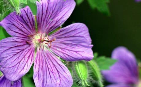 Støvvejen, natur, blad, blomst, sommer, kronblad, flora, haven