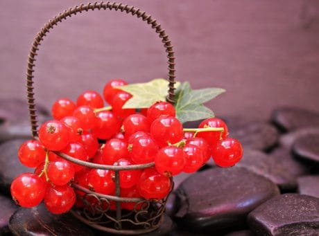 still life, currant, fruit, sweet, dessert, food, diet, organic