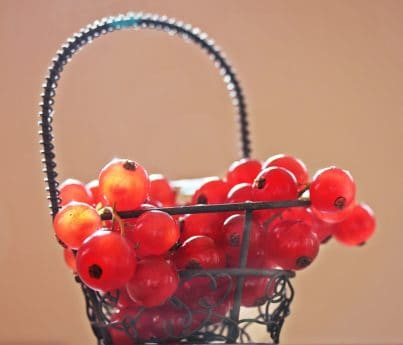 panier, organique, fruits, nature morte, groseille, berry