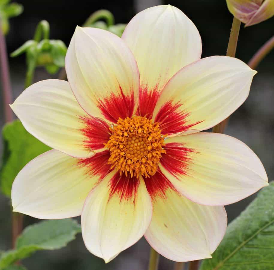 water lily, flower, nature, flora, garden, petal, leaf, summer, plant