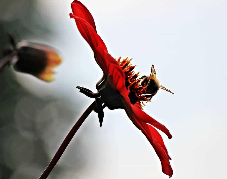 insecte, macro, détail, nature, pistil, lumière du jour extérieure,
