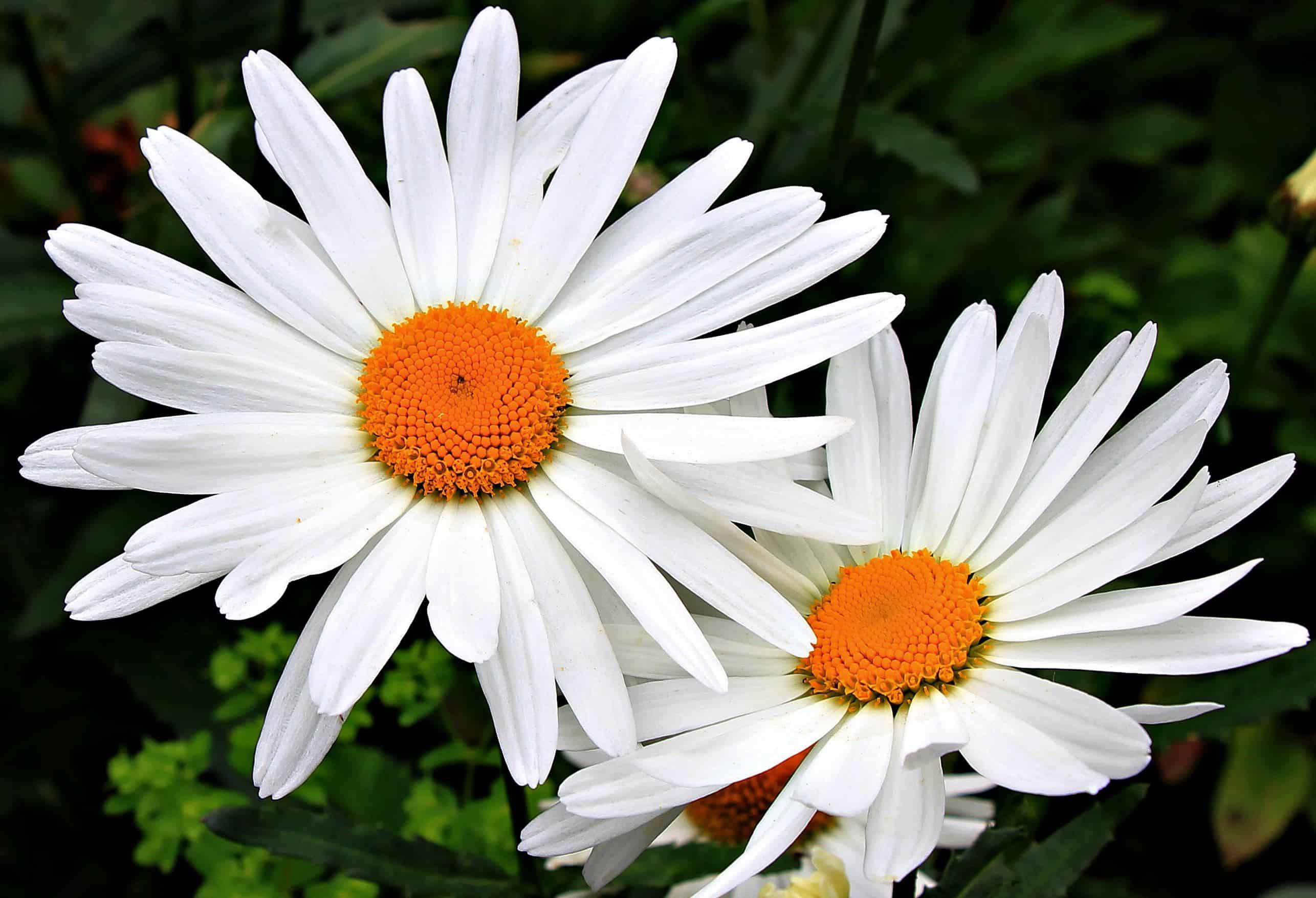 Free picture flower flora petal horticultureoutdoor white flower flora petal horticultureoutdoor white plant pollen mightylinksfo