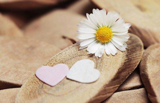 încă de viaţă, decor, natura, flori, petale, planta, floare, gradina, bloom, plante medicinale