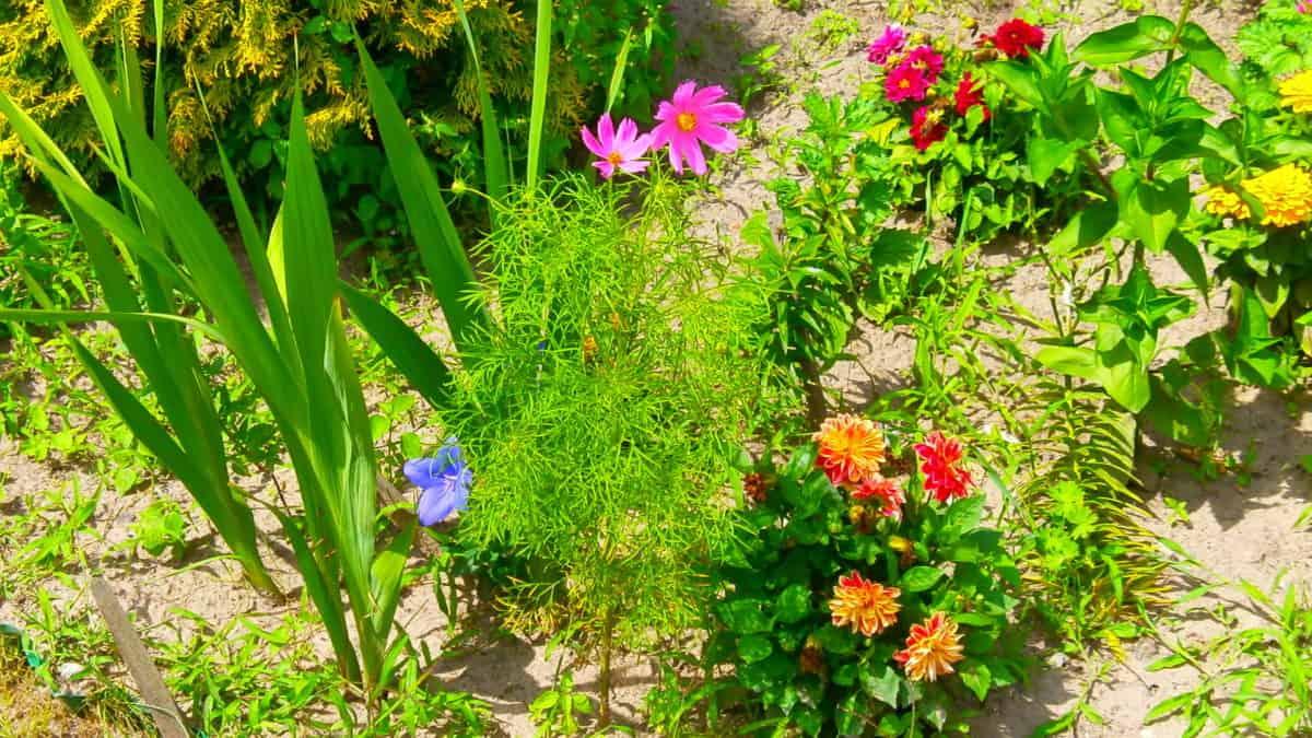 leaf, flower, garden, nature, flora, summer, herb, plant