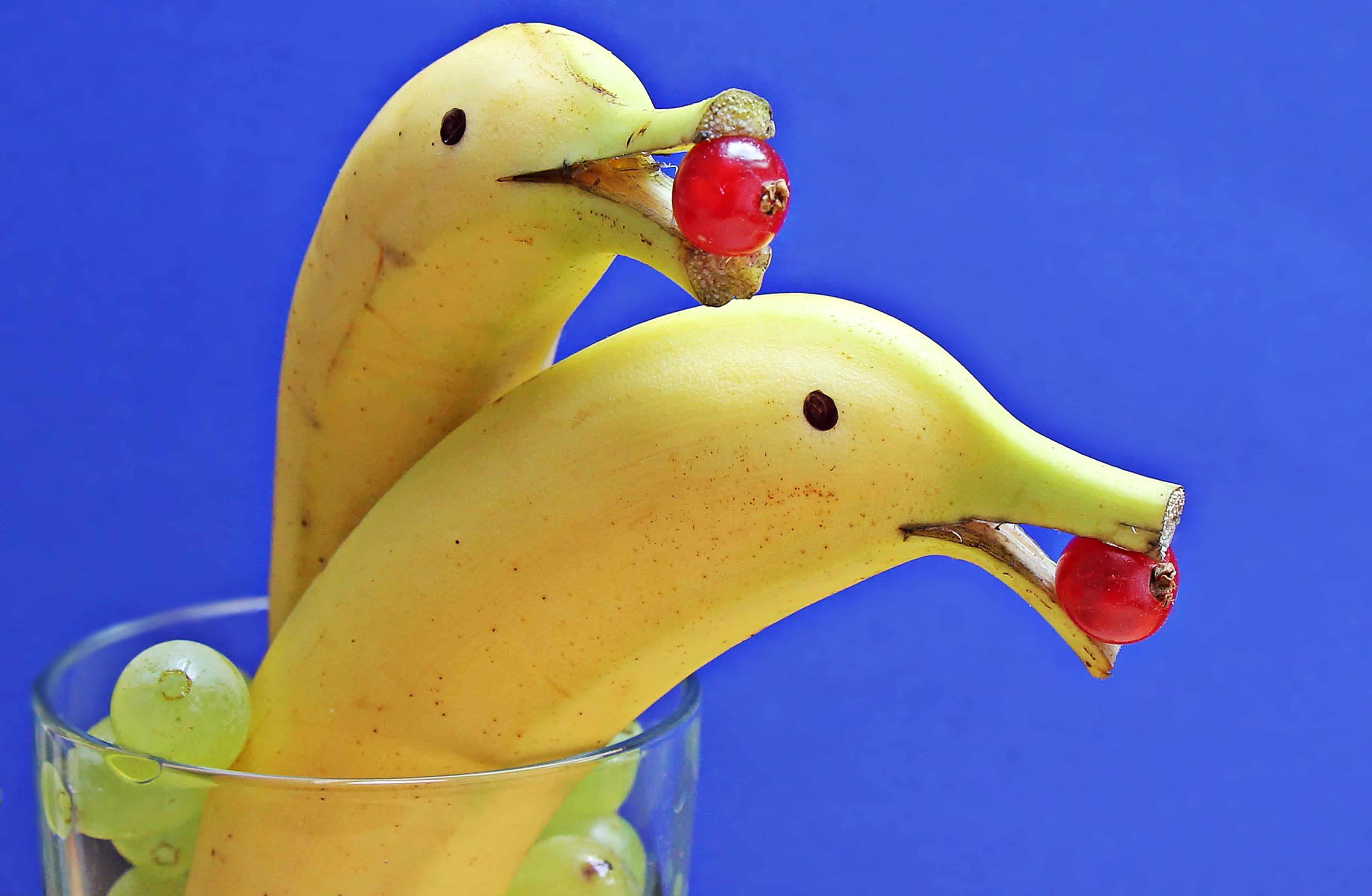 Картинки животных и фруктов