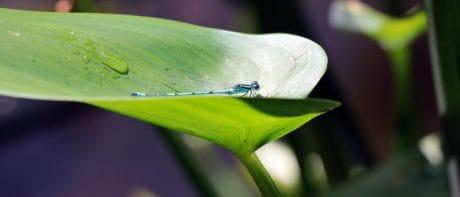 Флора, стрекоза, членистоногих, природа, зеленые листья, насекомых, растений, Сад