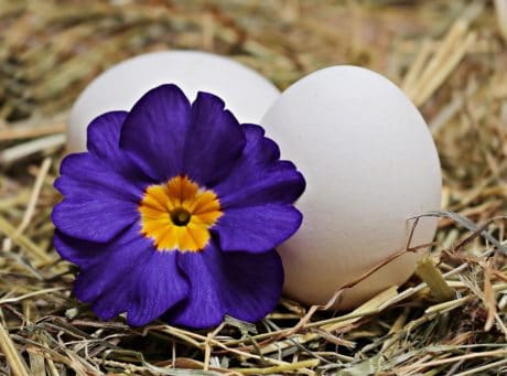 Easter egg, flower, nature, herb, plant, decoration, still life