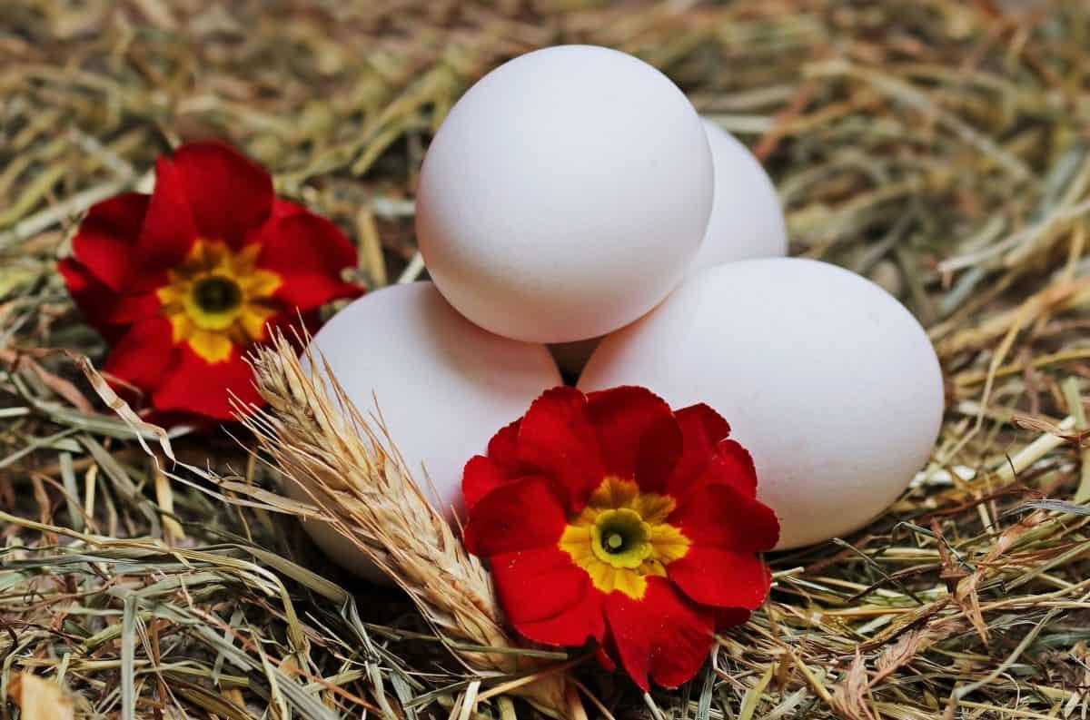 ไข่อีสเตอร์ ตกแต่ง รัง ธรรมชาติ ดอกไม้ ไข่ ฟาง
