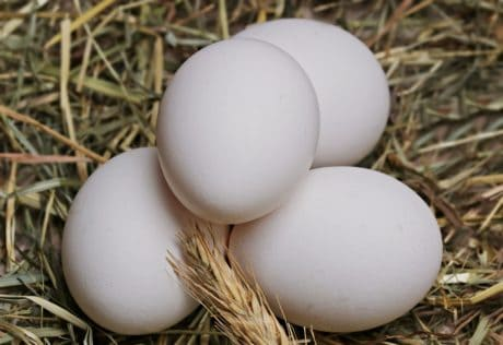 nature, eggshell, nest, shell, white egg, food, chicken, straw