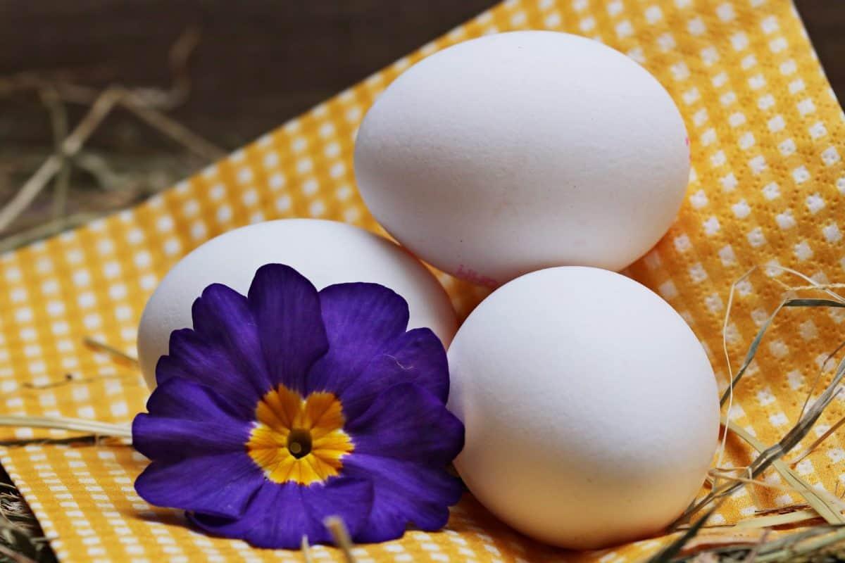 Velikonoční vajíčko, zátiší, dekorace, květ, okvětní lístek, příroda, sláma