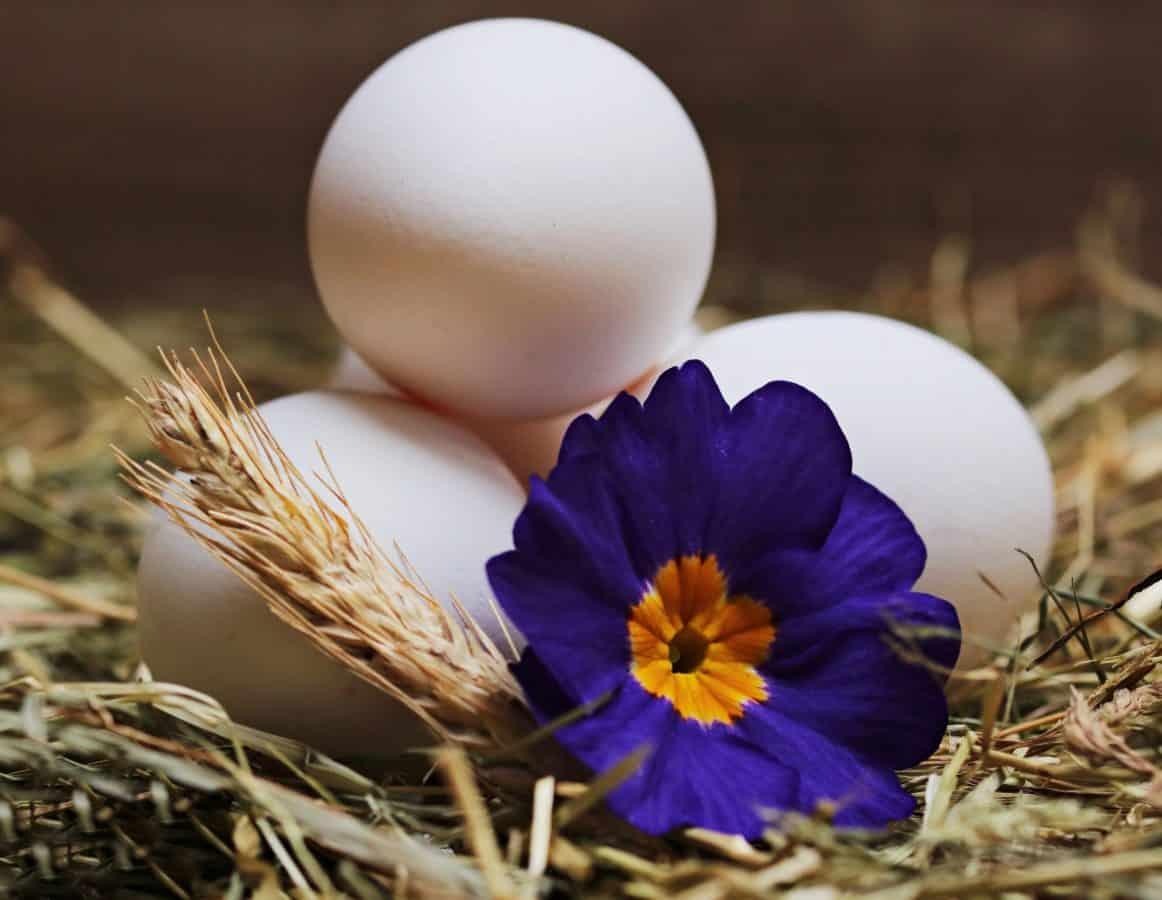 Zátiší, příroda, vejce, květin, rostlin, byliny, květ