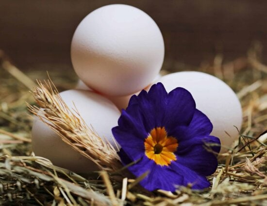 încă de viaţă, natura, ou, flori, plante, plante medicinale, floare