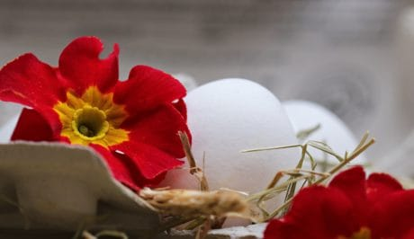 Easter egg, still life, decoration,flower, petal, bloom, egg, straw