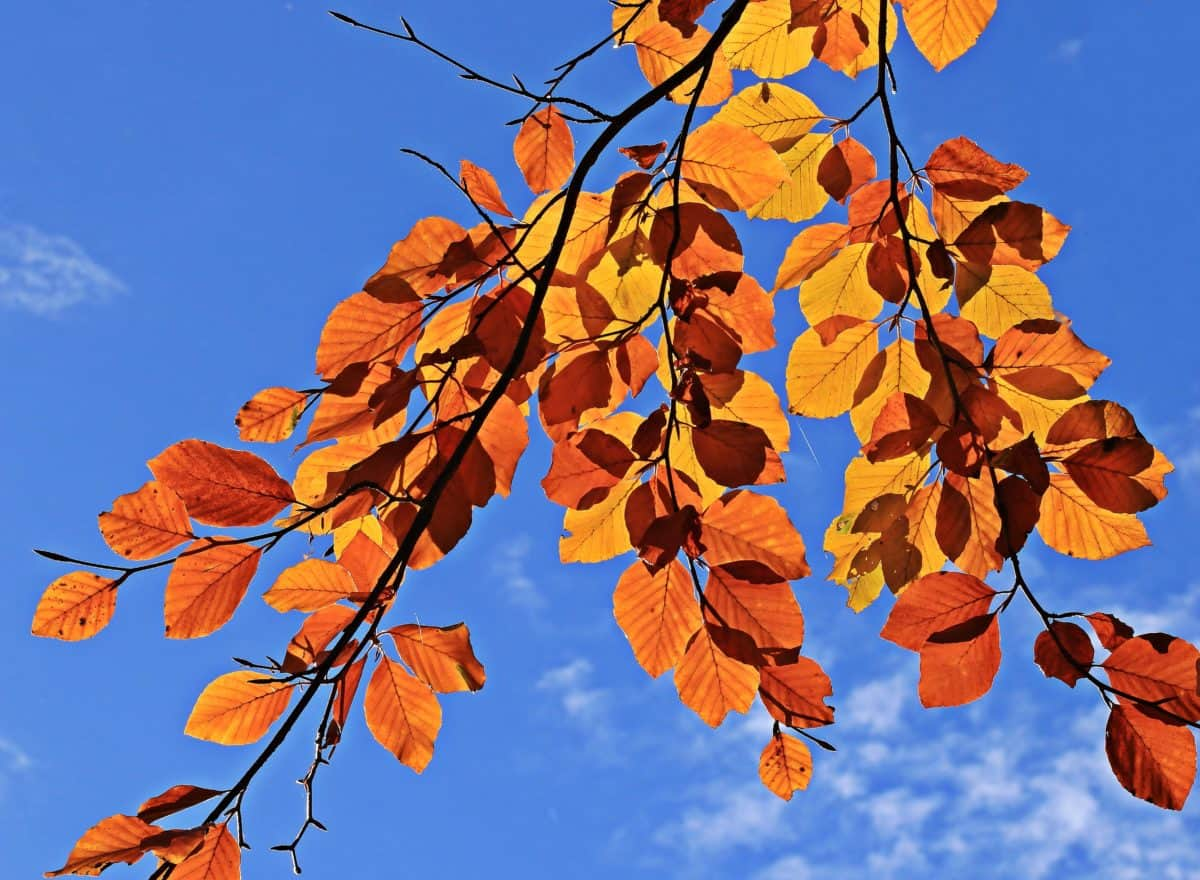 tree, branch, plant, autumn, blue sky, forest, brown