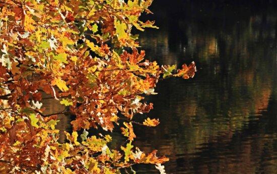 Herbst, Blatt, Natur, gelb, Wasser, Reflexion