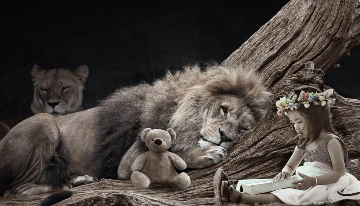 Katze, Löwe, Wild, Wild, Mädchen, Teddybär, Blume, Fotomontage, Spielzeug