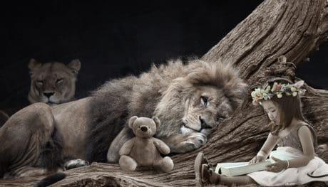 cat, lion, wildlife, wild, girl, teddy bear, flower, photomontage, toy