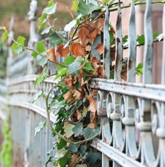 flora, iron work, fence, leaf, tree, nature, garden, outdoor