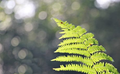 fern, green leaf, nature, sunshine, plant, outdoor, daylight, ecology