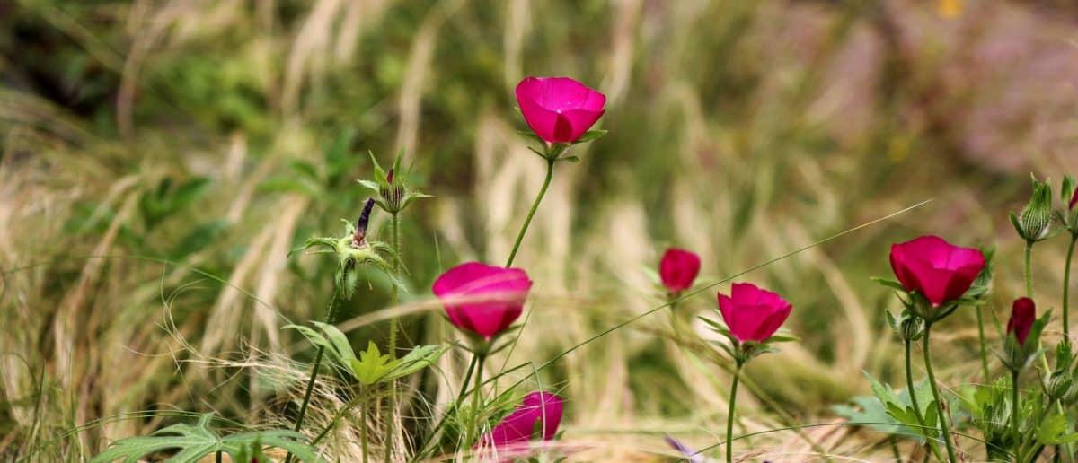 meadow, green grass, flower, petal, daylight, summer, plant