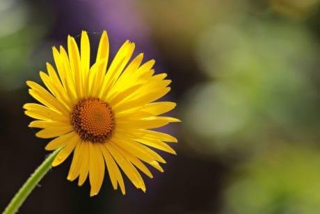 plant, spring, pollen, flora, yellow, horticulture, flower, petal