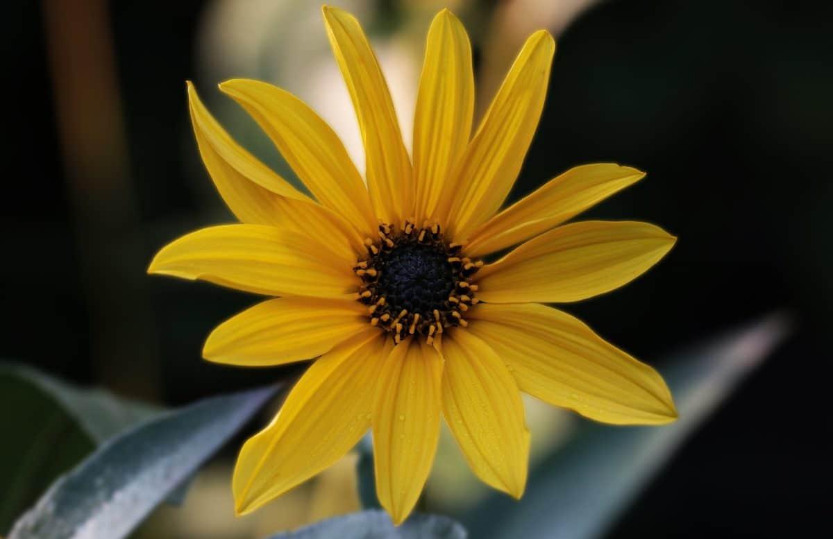 fleur jaune, pétale, plantes, printemps, lumière du jour, pollen