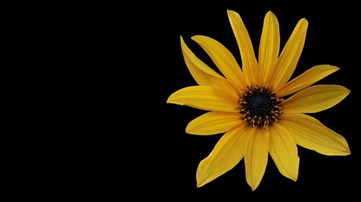 photo studio, dark, shadow, flower, petal, plant, blossom