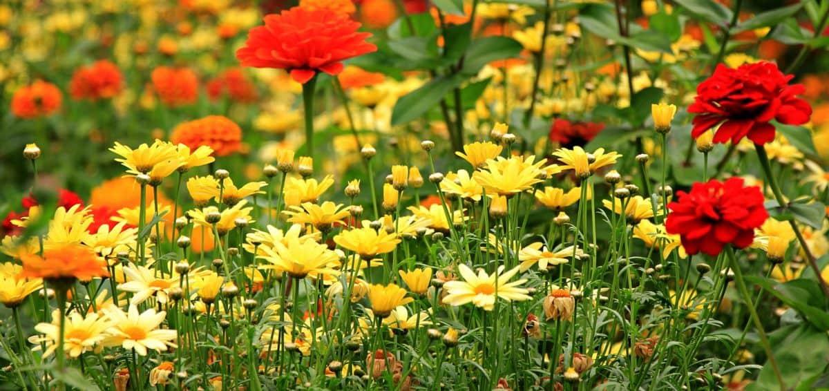 field, nature, leaf, meadow, flower, ecology, summer, grass, garden, flora
