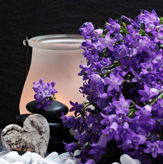 încă de viaţă, inima, decorare, flora, natura, plante, flori, violet, lampa, inima, romantism