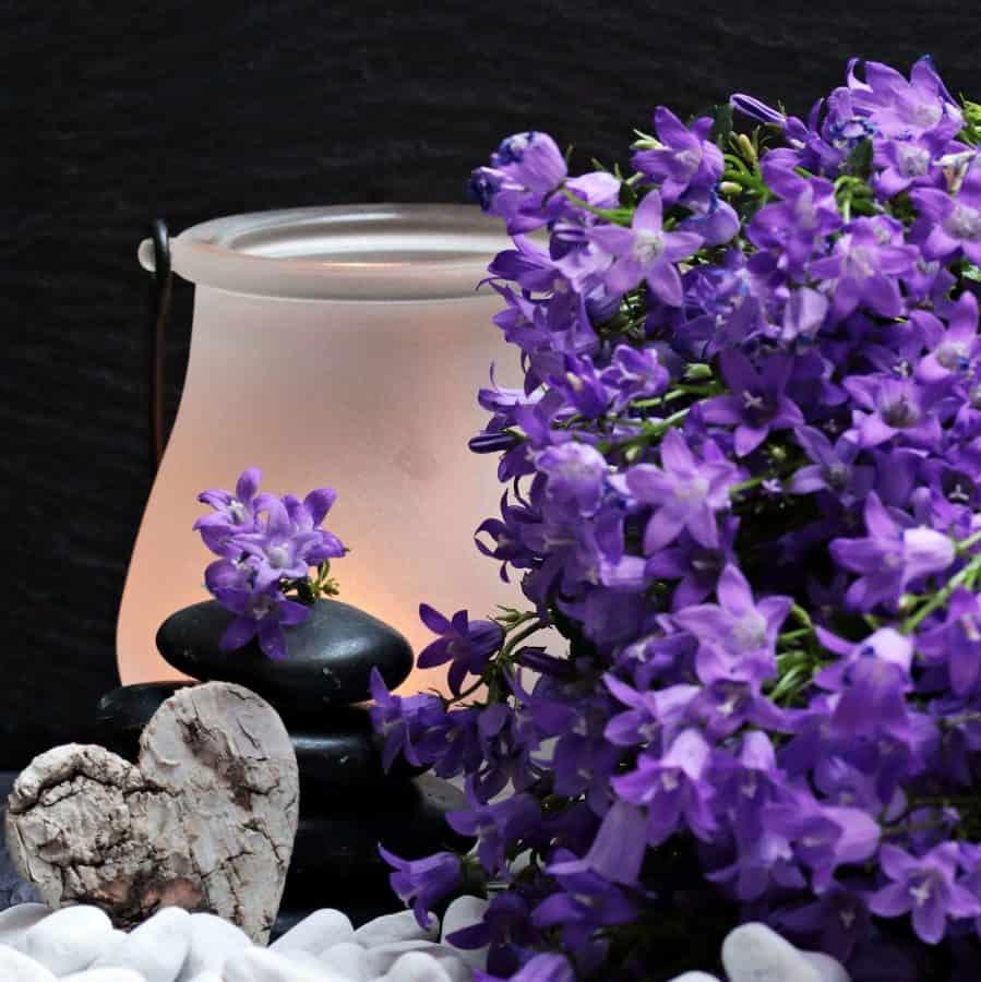 still life, heart, decoration, flora, nature, plant, flower, violet, lamp, heart, romance