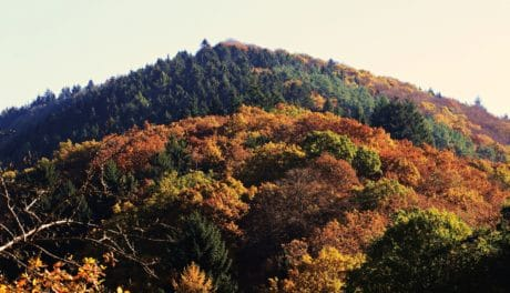 landscape, tree, leaf, hill, nature, plant, autumn, outdoor, sky