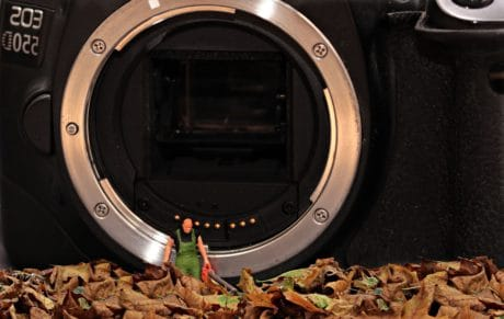 decoration, lens, photo camera, toy, doll, leaf, autumn