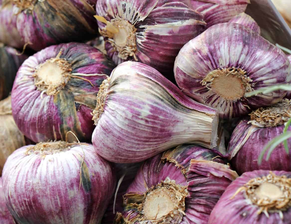 garlic, market, food, vegetable, onion, organic, agriculture