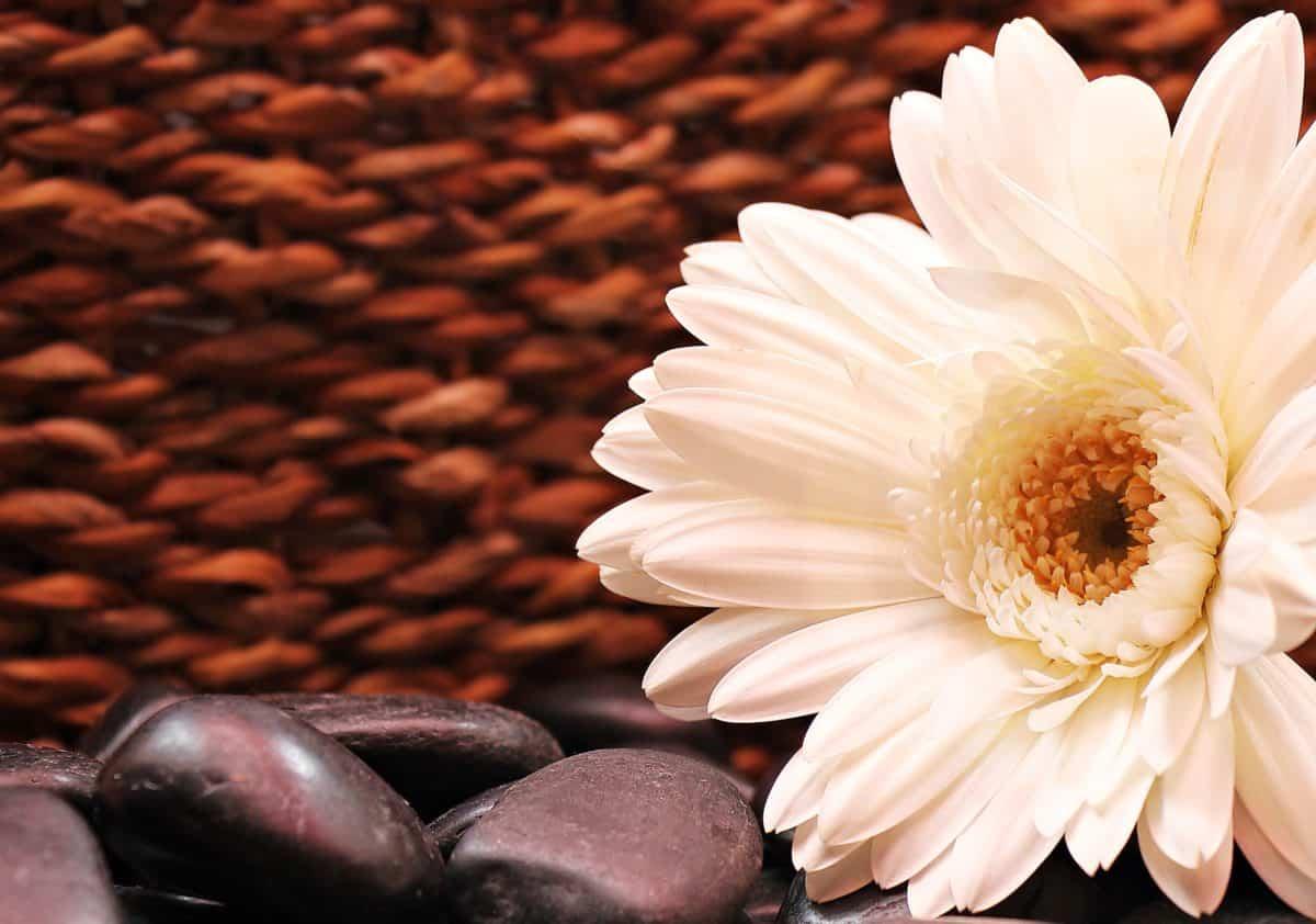 Foto studio, fotografija, priroda, cvijet, latica, biljka, Blossom, cvatu, latice