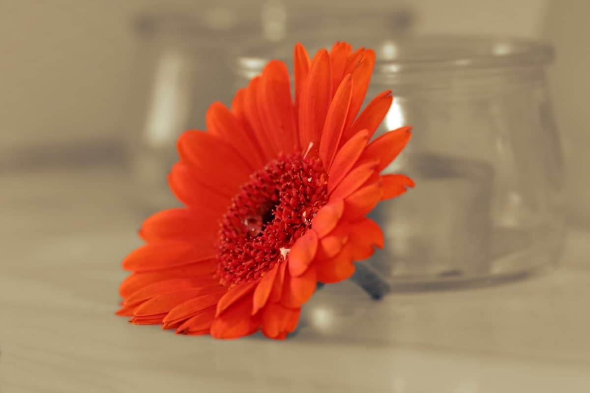 nature, flower, ornage color, petal, blossom, plant, garden, bloom, flora