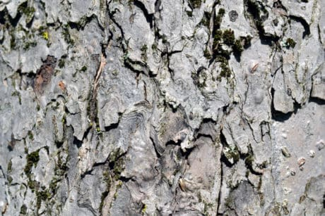 texture, abstract, old, pattern, tree bark, surface, material