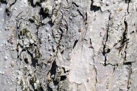 old, abstract, bark, pattern, texture, material, surface